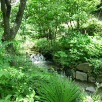 小川のせせらぎがそのまま遺された中庭、自然との共存を実現させたマンションです
