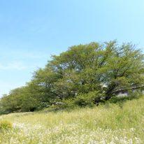 多摩川河川敷の様子、ジョギングや散歩、サイクリングなどにも(外観)